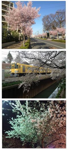 sakura_convert_20130404013344.png